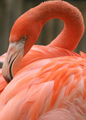PINK THOUGHTFUL FLAMINGO