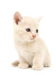 Shy yellow kitten