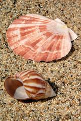Sand and Sea Shell