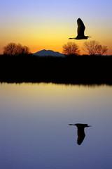 Egret Over Pond