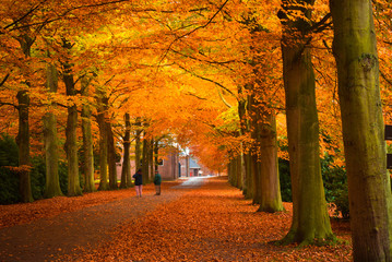 Foto op Plexiglas Rood paars autumn in the forest