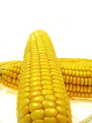 Isolated ear of corn on a white background