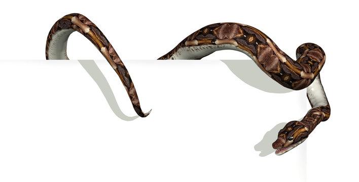 Snake on Sign Edge - 3D render