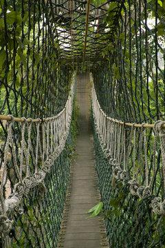 bridge inside tropical jungle