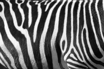 photo of a zebra texture Black and White