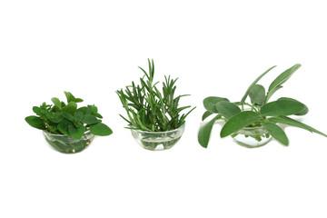 Herbs in kitchen