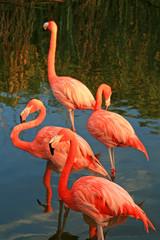 rode flamingo in een park