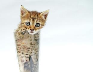 cute cat in the bowl
