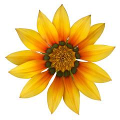 fleur soleil détourée