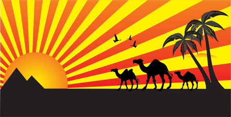 Camels walking, pyramids in background. Travel concept.