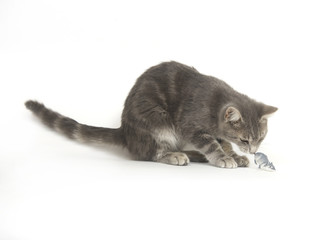 gray kitten and toy mouse