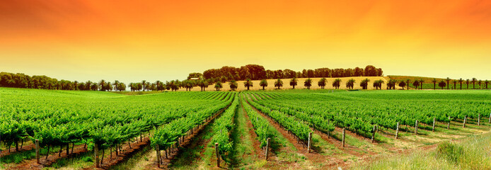 Stores photo Vignoble Vivid Vineyard