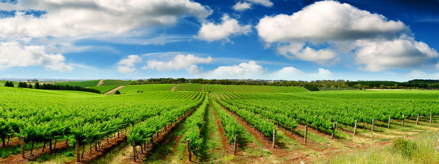 Wall Murals Vineyard Green Vineyard Landscape