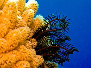 contrastes sous marins