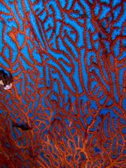 garphisme sous marin