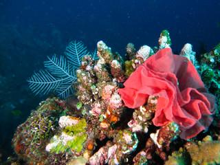 rose sous marine