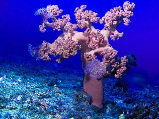arbre des fonds marins