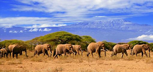 Kilimanjaro With Elephants