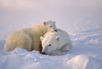 Polar bear with her cub