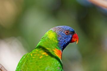Wild Birds of Color