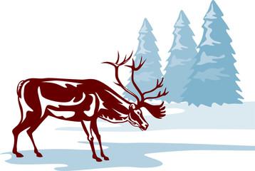 Reindeer in a winter scene