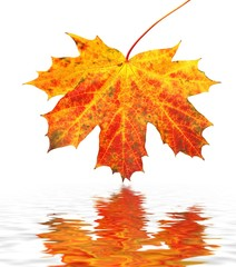 Autumn leaves and reflection in water