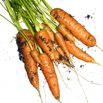 Bunch of fresh carrots with sand