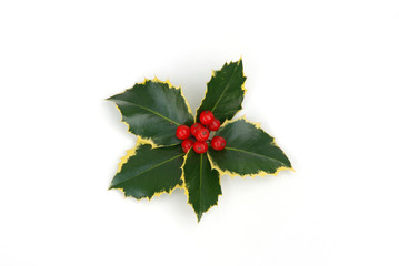 holly berries on white background