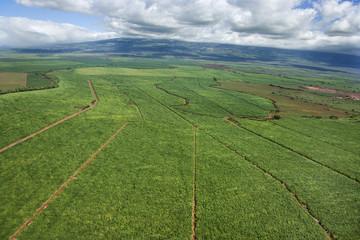 Irrigated cropland.