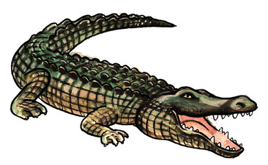 One big crocodile with open snout
