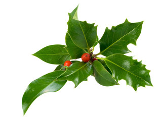 Ilex,holly,christmas decoration