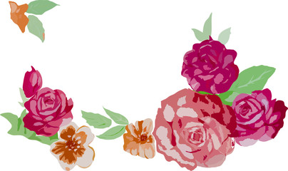 red rose flowers illustration