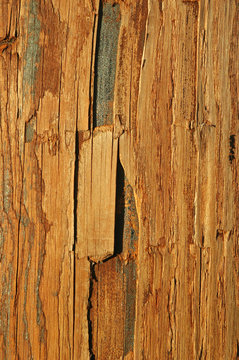 stained and textured wood abstract