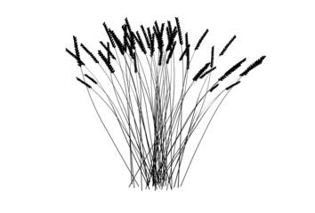 Wheat silhouettes