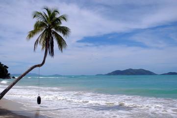 palma in spiaggia di cane garde bay