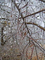 Ice - freezing rain