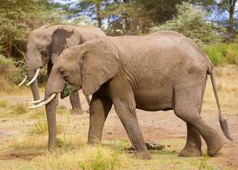 Full Elephant Detail