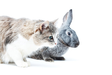 portrait of cat with rabbit on white with small shadows