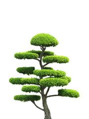 Printed kitchen splashbacks Bonsai Ornamental Tree