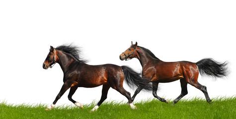 Fotoväggar - horses trot