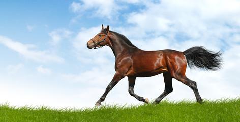 Fotoväggar - horse trots