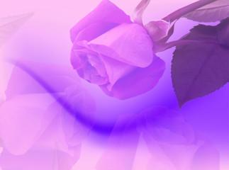 Sfondo con rosa