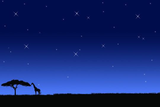 giraffe night sky africa