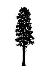 Incense Cedar Tree Silhouette