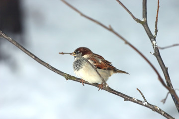 Small sparrow sitting on a branch
