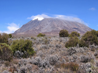 a view of mount kilimanjaro from the marangu route.
