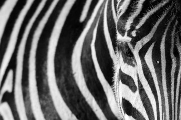 Autocollant pour porte Zebra Zebra