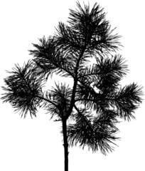 Isolated tree - 4. Mask