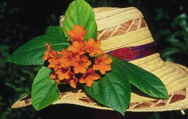Fleur de sébestier au chapeau