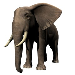 African Elephant 3D Image